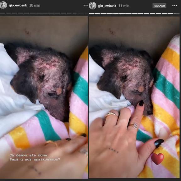 Giovanna Ewbank e Bruno Gagliasso resgatam cachorro na estrada